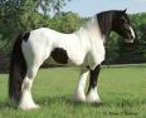 We-love-horses